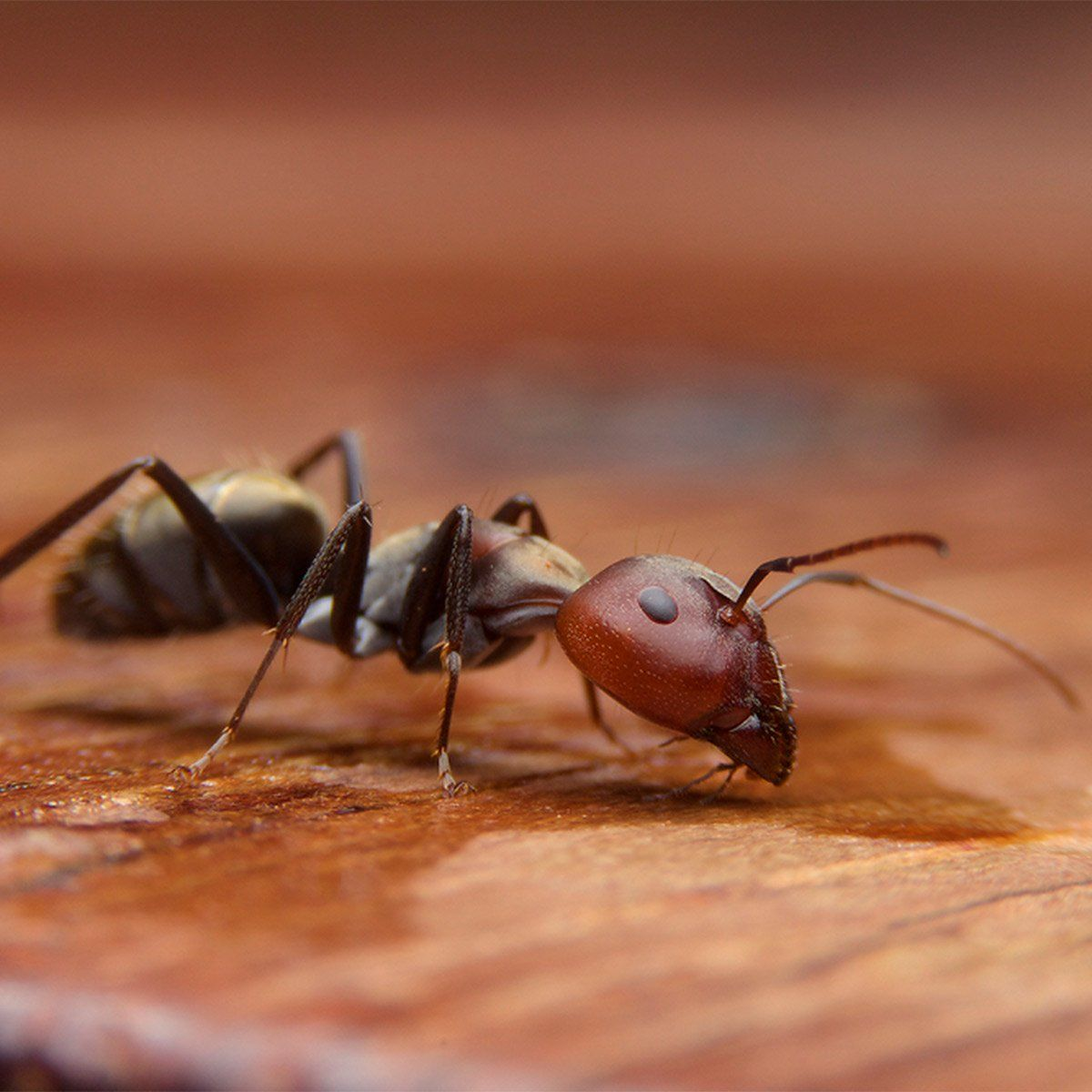 The 16 Most Disgusting House Bugs and How To Get Rid of