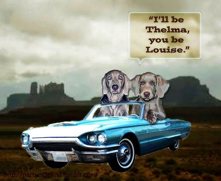 Thelma and louise cartoon thelma louise pinterest thelma thelma and louise cartoon thelma louise pinterest thelma louise brad pitt and cartoon bookmarktalkfo Images