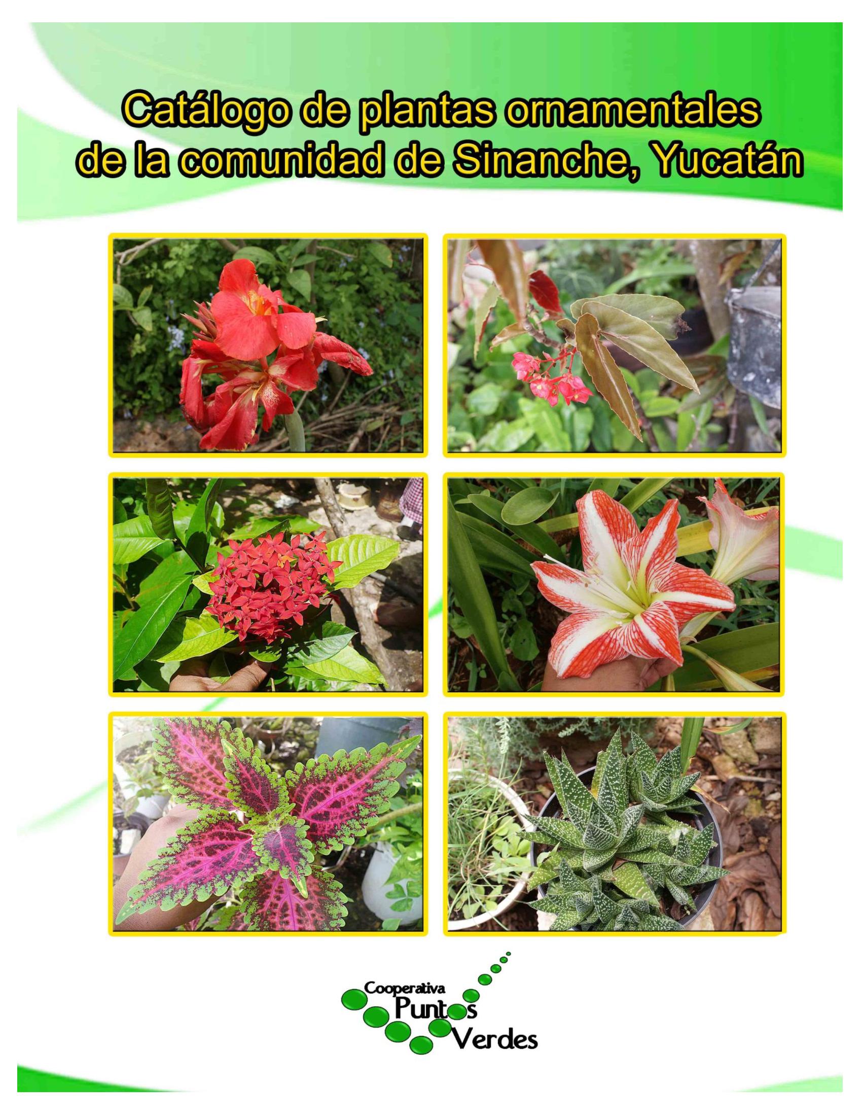 Catalogo de plantas ornamentales de sinanche yucat n for Informacion de plantas ornamentales