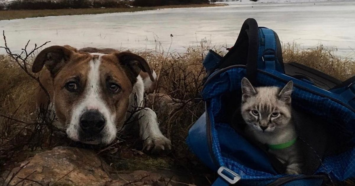 Adorable cat and dog are travelling the world together and