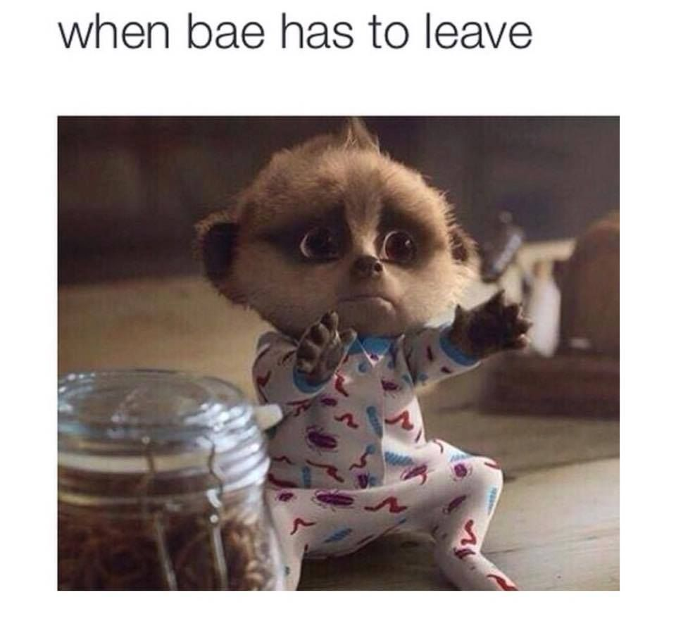 Funny Memes For Bae : When bae has to leave funny hug