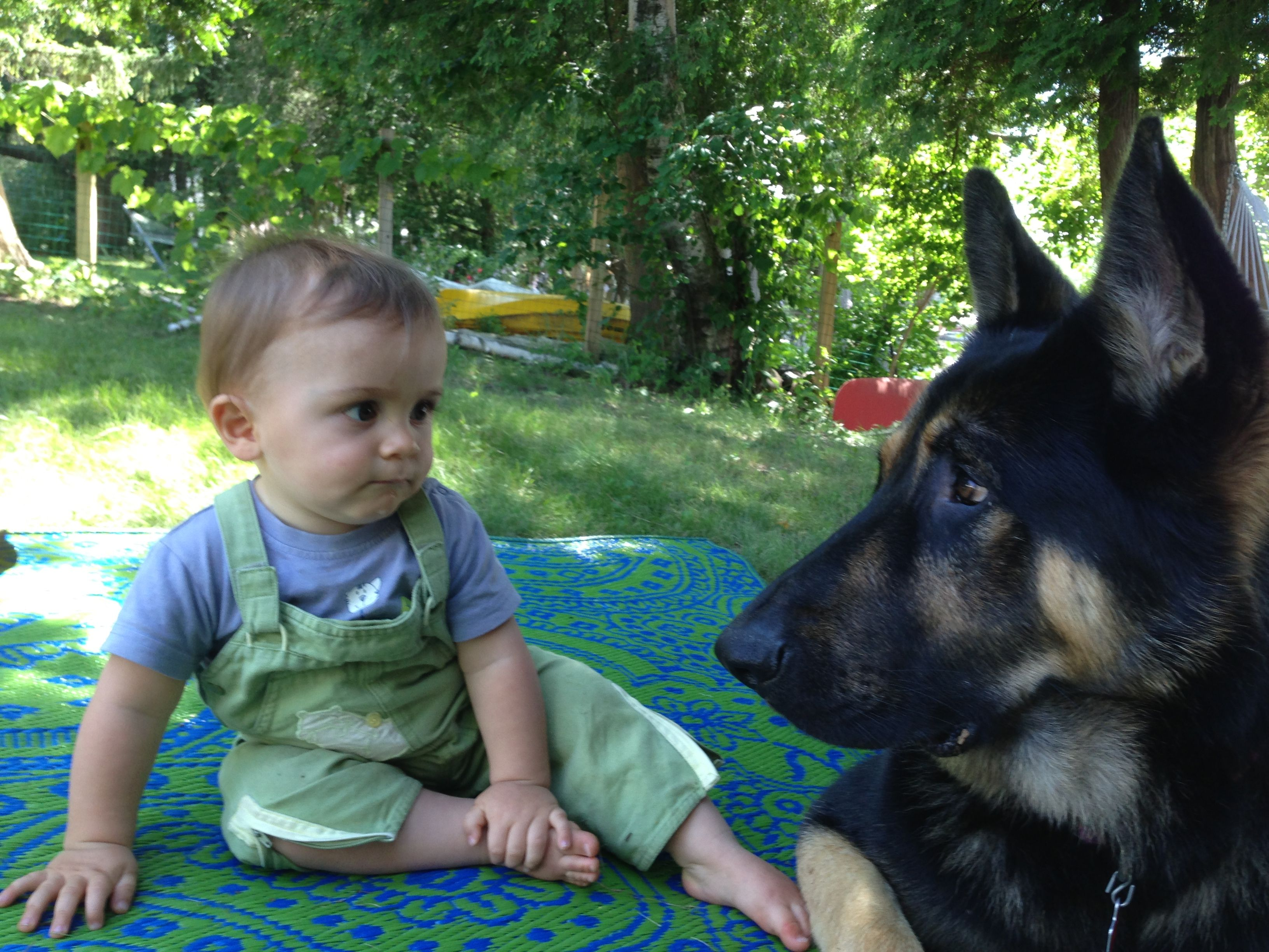 German shepherd meets the baby what is this thing