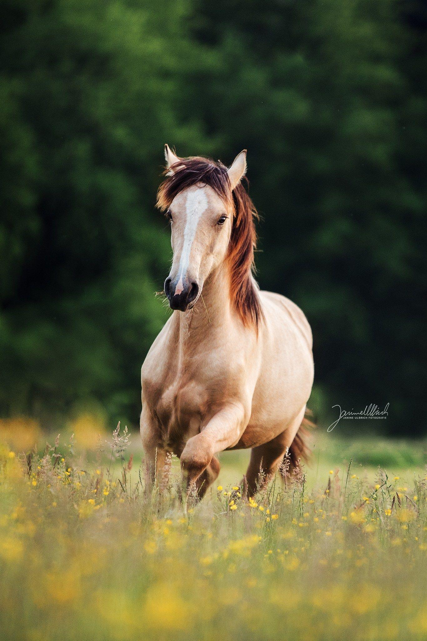 Pin Von Anna Barelli Auf Cavalli In 2020 Pferde Fotografie Pferdefotografie Pferdefotos