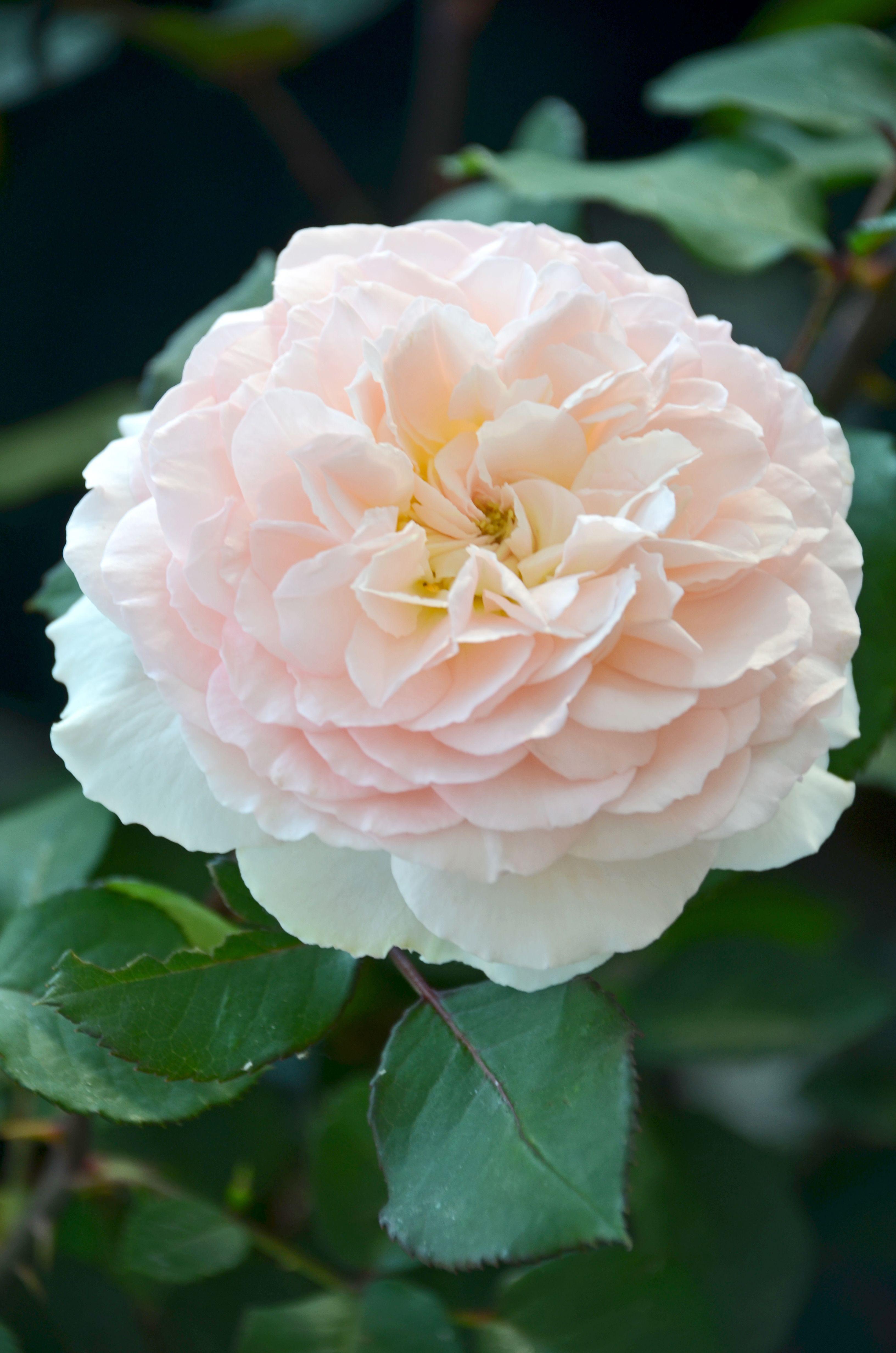 Rose Un Mondo Di Profumi Emozioni E Meraviglia Rose