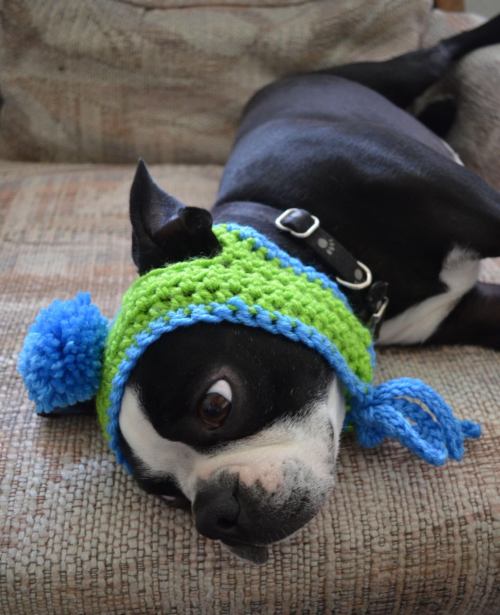 Knitting Pattern Hat Dog : Hat for Boston Terrier my pattern pet knit and crochet Pinterest Terrie...
