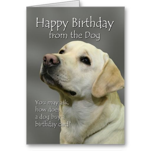 Happy Birthday from the dog Yellow Labrador birthday card – Labrador Birthday Cards