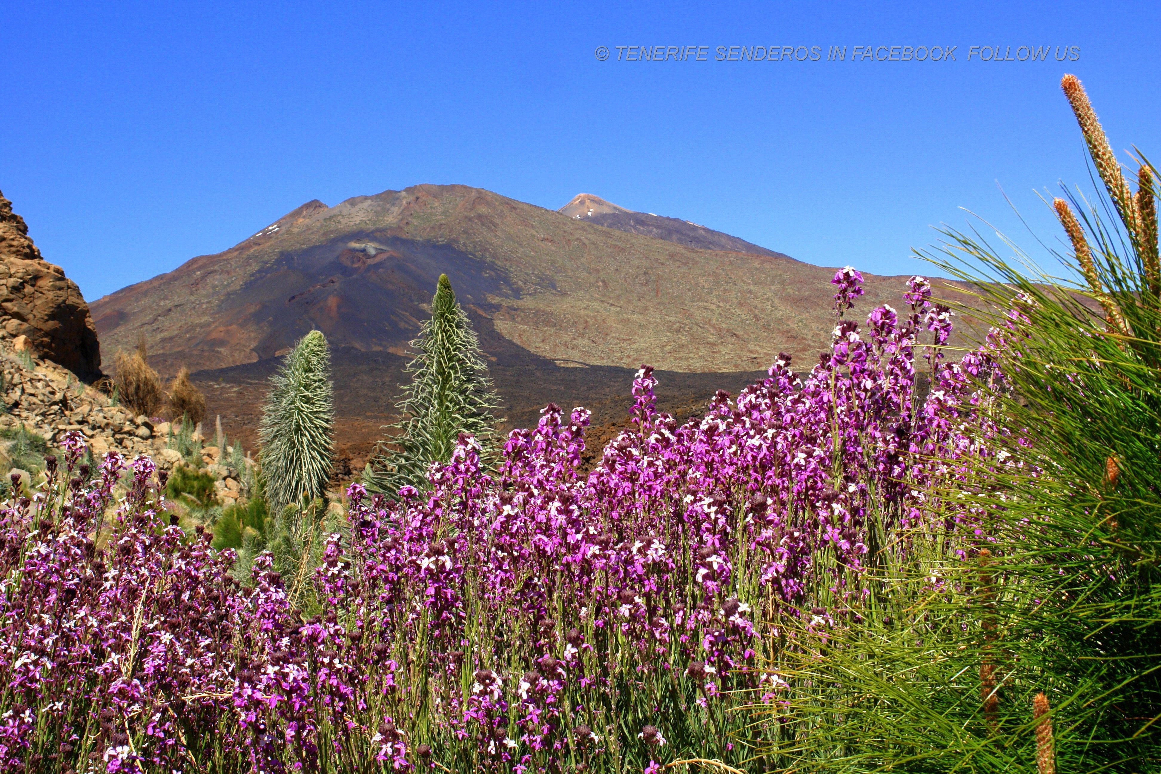 PRIMAVERA EN EL TEIDE | Teide, Tenerife, Paisajes