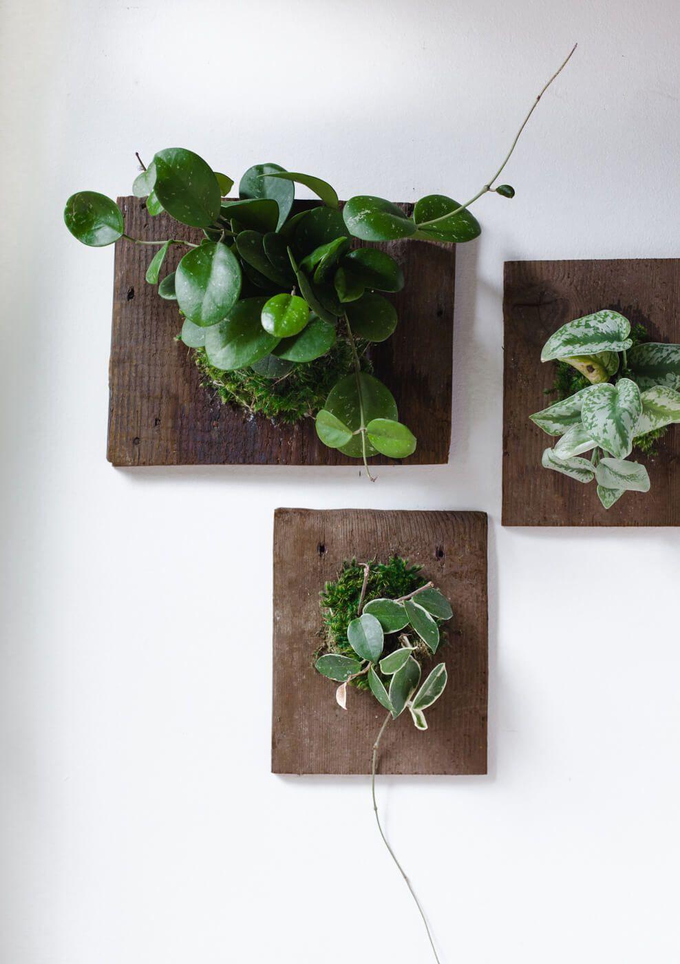 Diy Wall Mounted Plants Aka Living Art A Beautiful Mess Plant Wall Decor Plant Wall Diy Plants