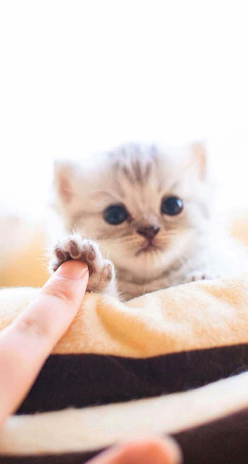 Pin By Soldier On Cute Cat Cute Animals Cute Baby Animals Kittens Cutest