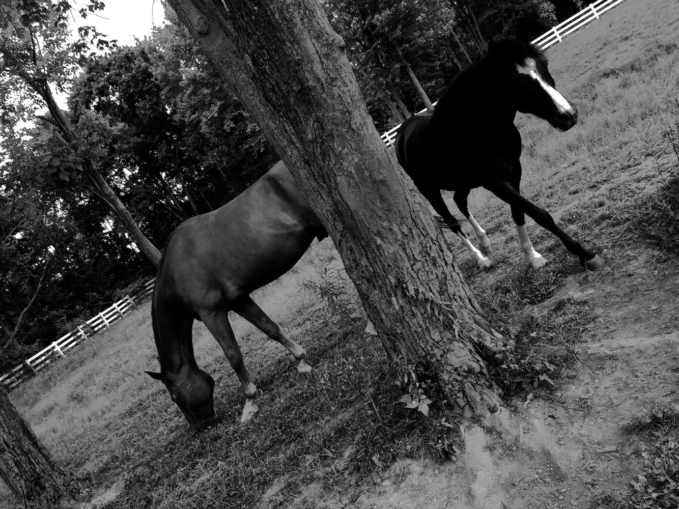 """""""A split pasture"""""""