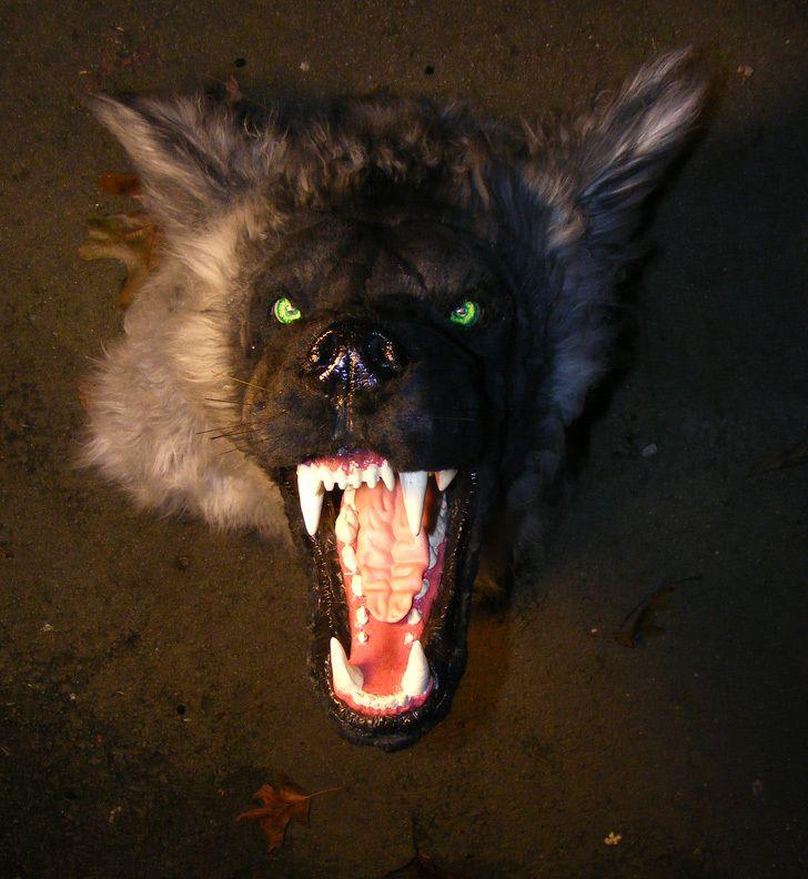 werewolf head mount halloween prop haunted house horror taxidermy glowing eyes ebay