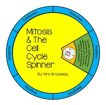 Mitosis Cell Cycle Spinner Puzzle And Note Classroom