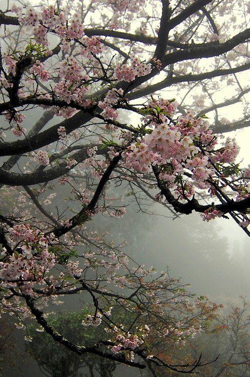 Pin By Carolycia On Four Seasons Spring Blossom Trees Spring Blossom Beautiful Flowers