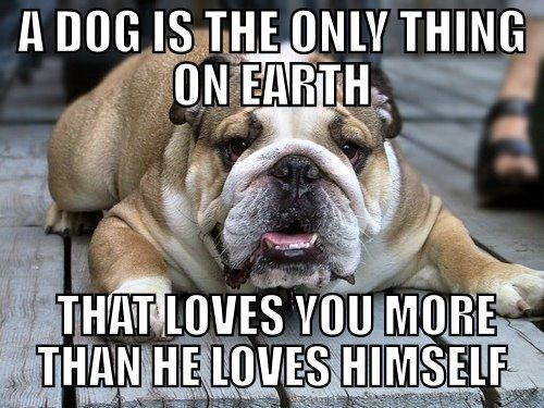 A Dog Is The Only Thing On Earth That Loves You More Than He Loves Himself Bulldog Funny Bulldog Pictures Dogs