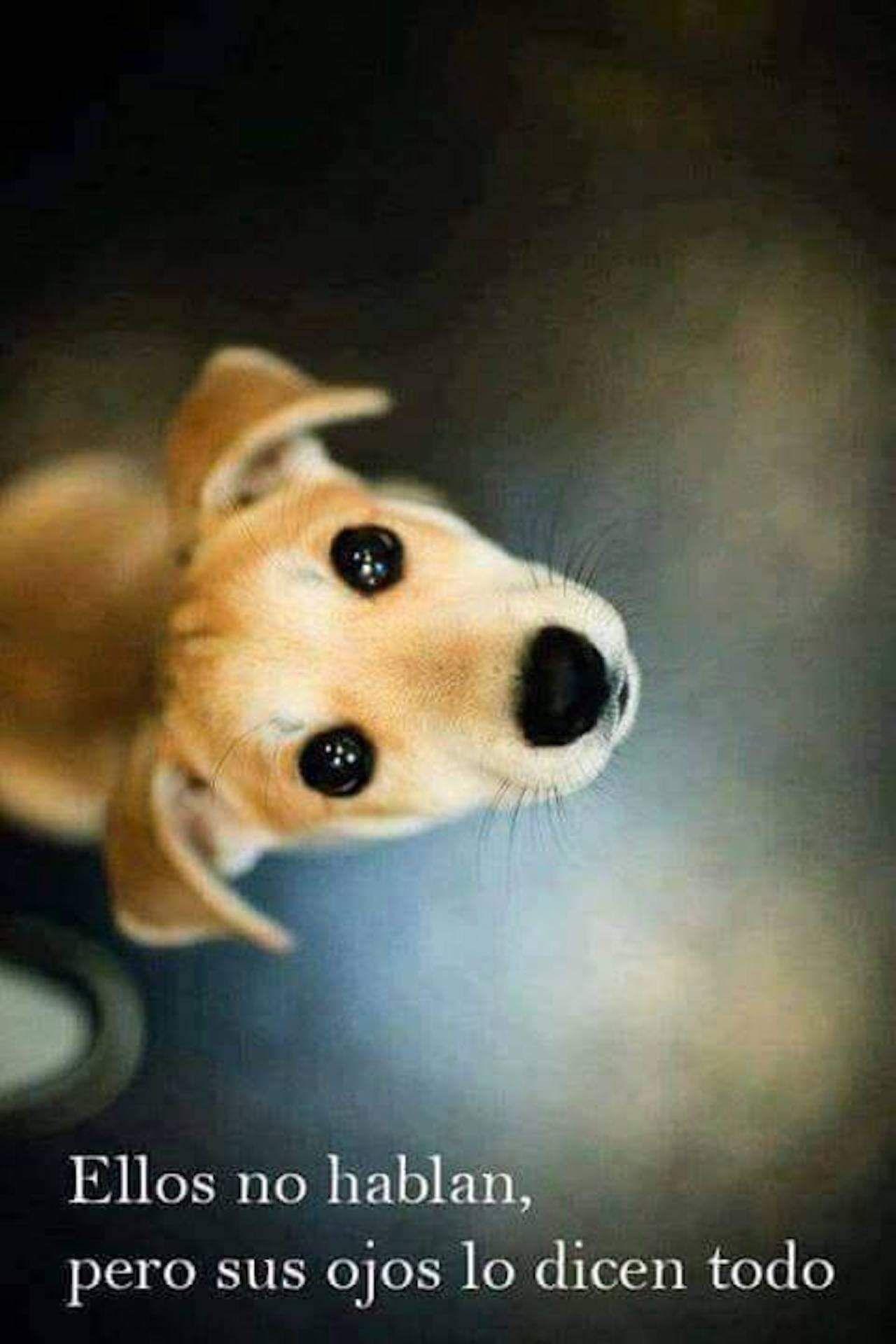 Los Ojos Son La Ventana Del Alma Fotos De Animales Tiernos Perros Frases Chistes De Perros