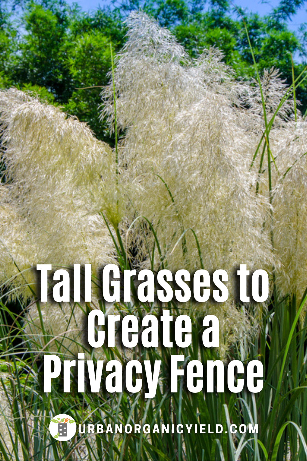 Tall Privacy Fence Ideas With Ornamental Grasses Tall Ornamental Grasses Ornamental Grass Landscape Privacy Landscaping Backyard