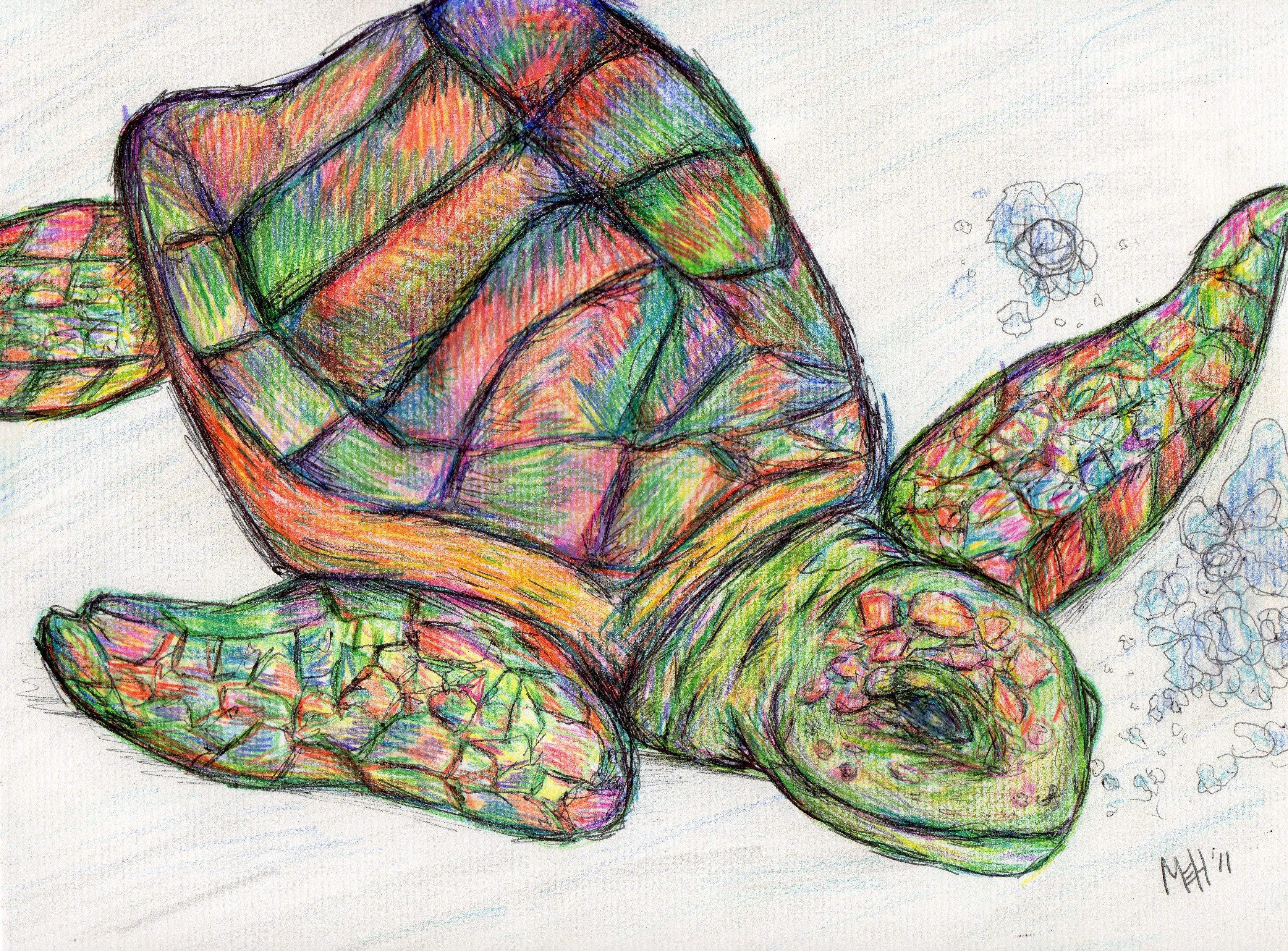 Sea turtle colored pencil sketch coloredpencil art for Turtle color