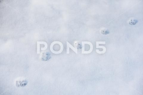 Cat's trace on snow Stock Photos ,#trace#Cat#snow#Photos