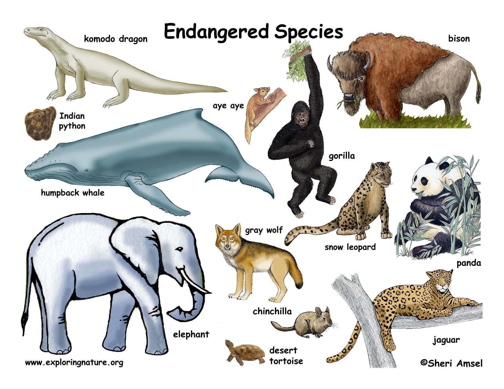 Endangered animals Endangered animals