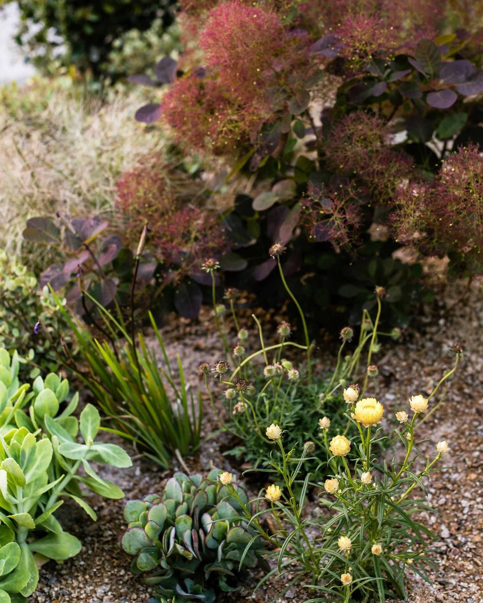 We swing by landscape designer phillip witherus garden at this