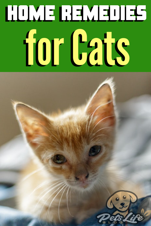 Commun Home Remedies for Cats (Dengan gambar)