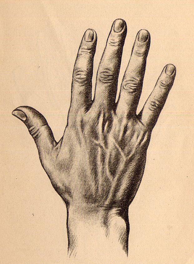 Worksheet. cmo dibujar las manos dibujo de manos dibujos de manos la mano