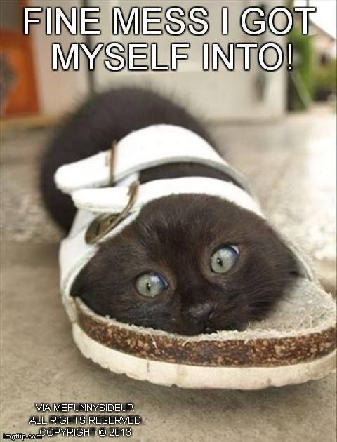 Top 30 funniest animal pics with captions - Funny animal pictures with words ...