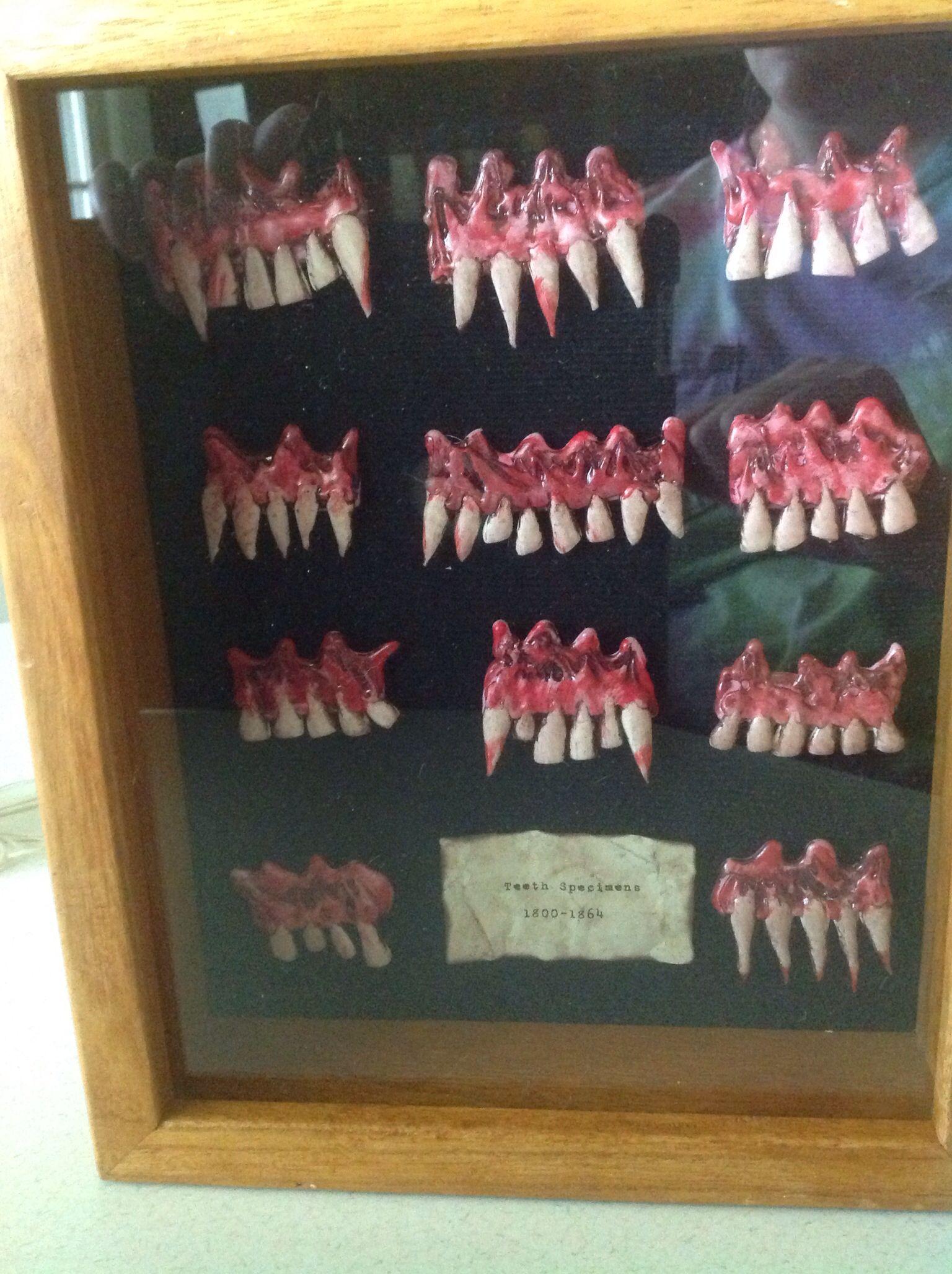 Teeth Specimens
