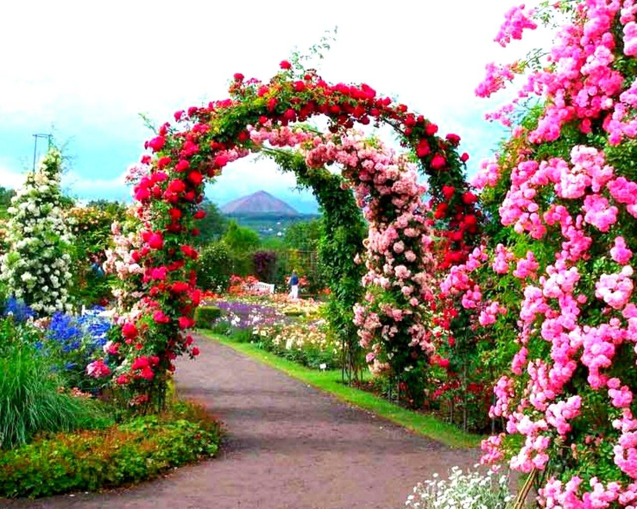 Garden Flowers Wallpaper beautiful garden flowers path arch wallpaper flower images