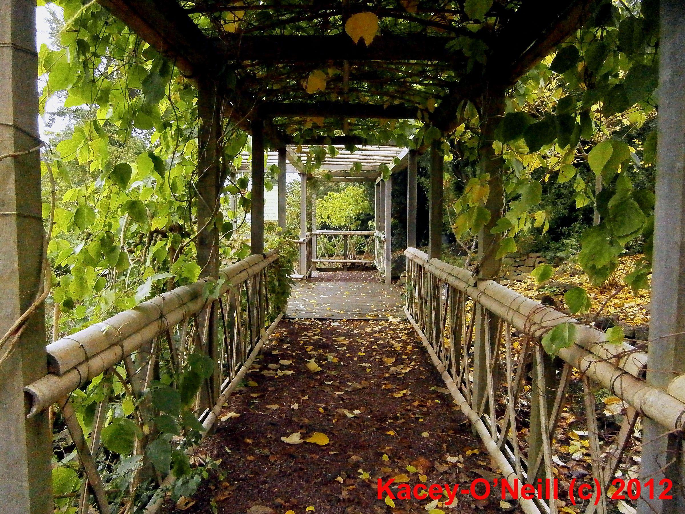 Botanical Gardens, Japanese walkway in the autumn | Urban Connectors ...