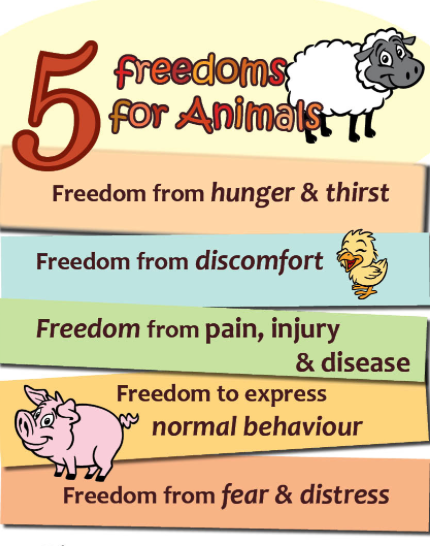 5 Freedoms – The 50th Anniversary of Animal Rights for Furry ...