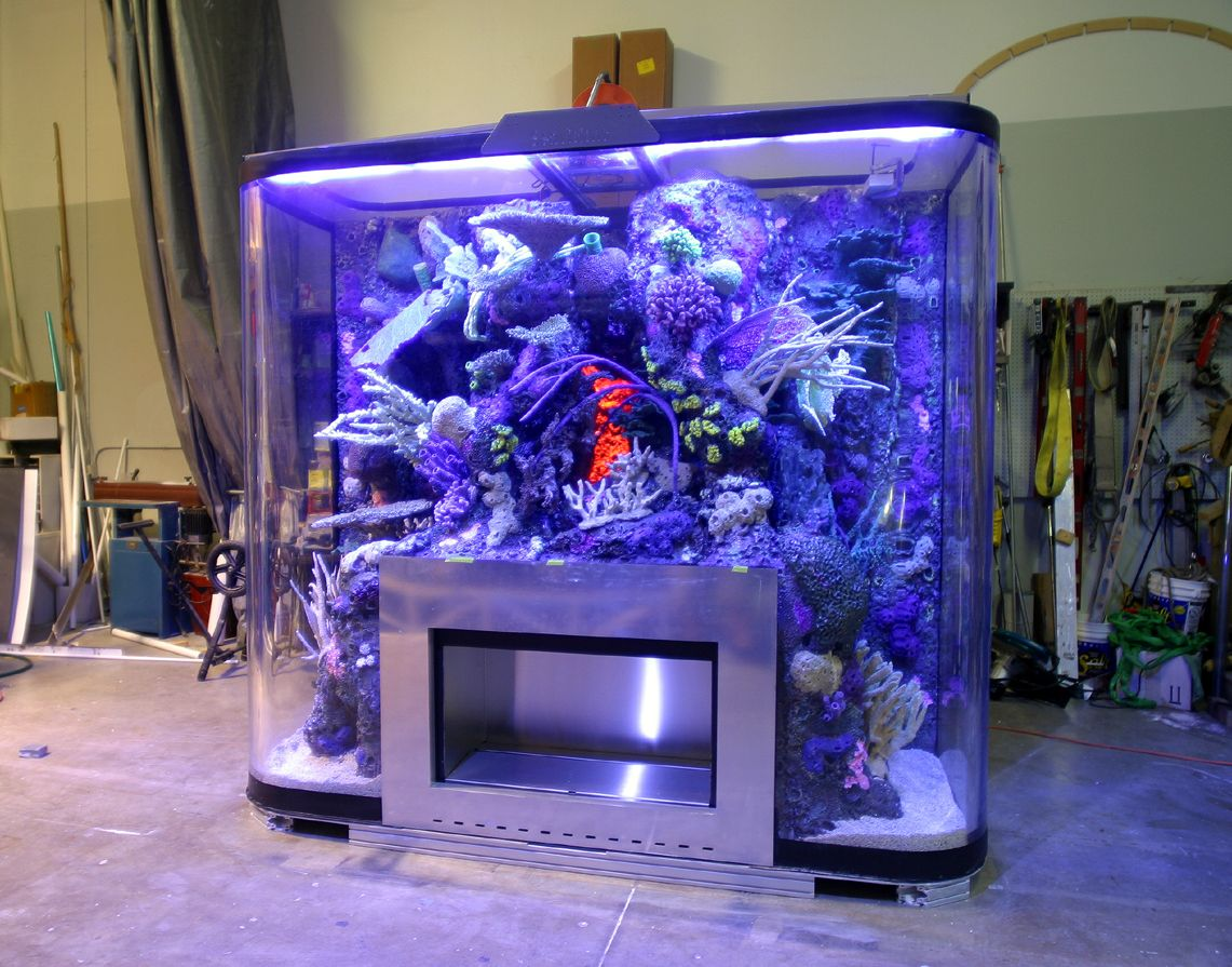 Fish tank fish tanks aquariums pinterest fish tanks for Large fish tank