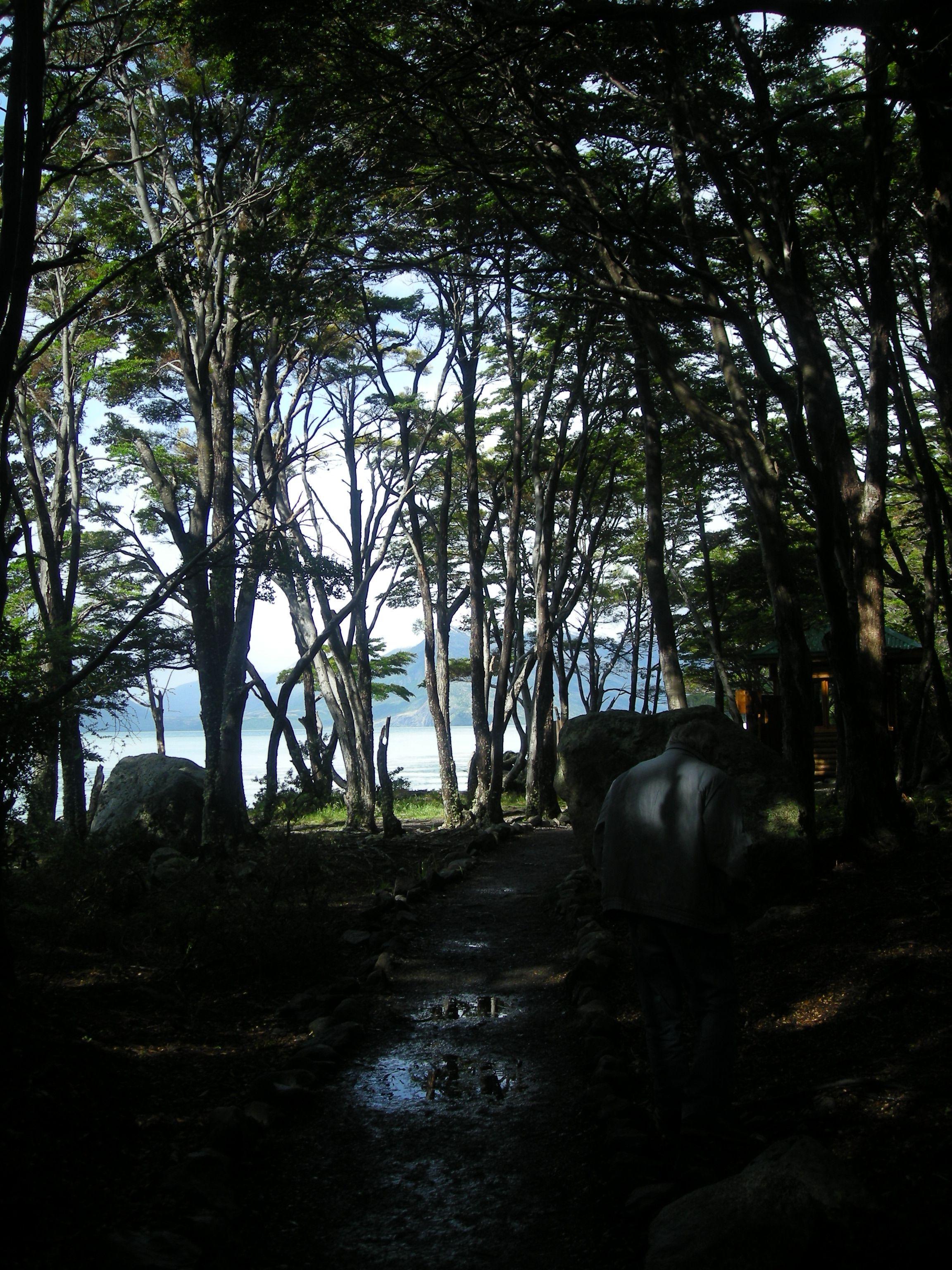 Bosques, Torres del Paine.