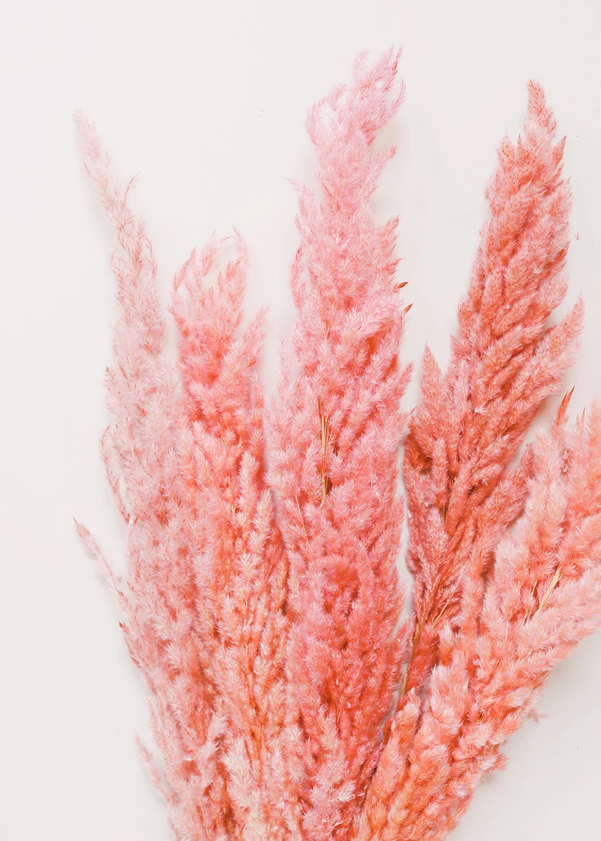 Natural Dried Pampas Grass In Pink Pampas Grass Afloral Com Pink Pampas Grass Artificial Flowers And Plants Pampas