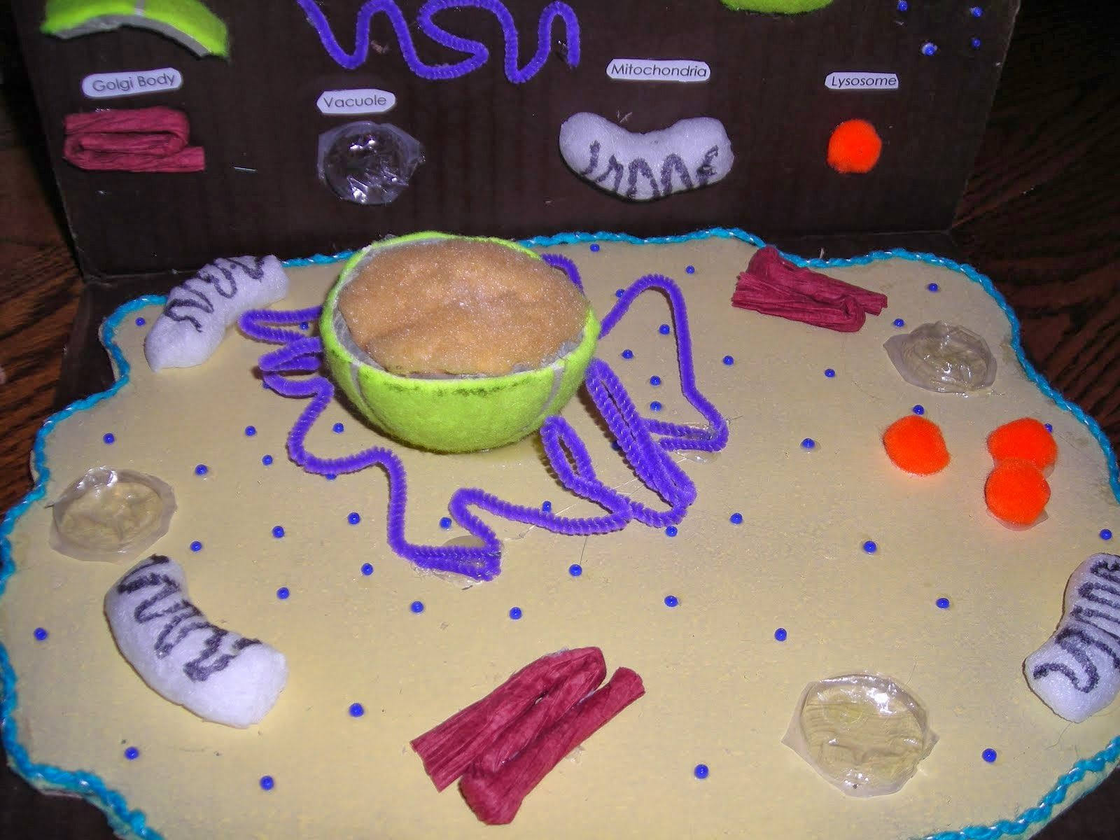 Animal Cell Model Diagram Project Parts Structure Labeled