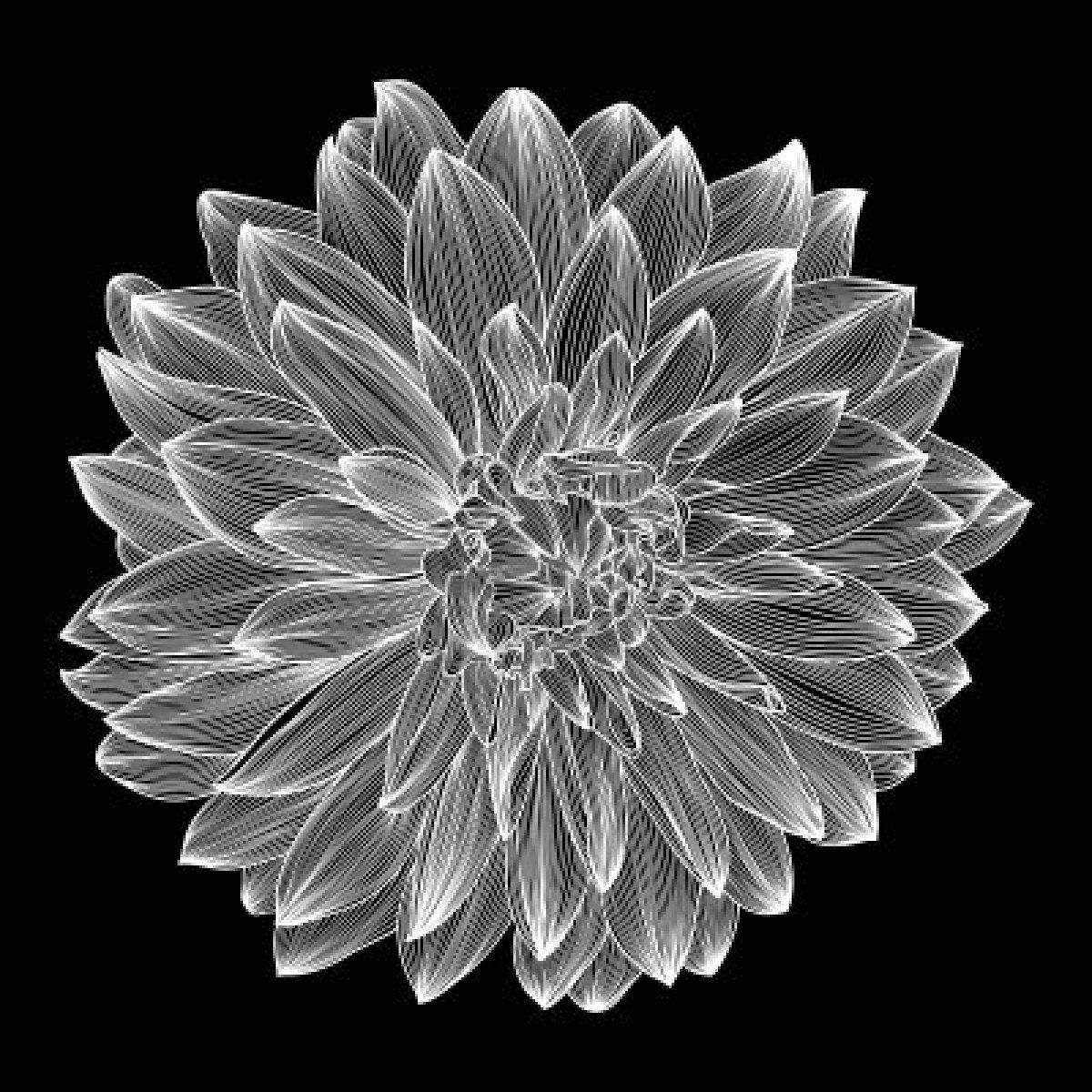 Black And White Flower png download - 633*414 - Free Transparent Drawing  png Download. - CleanPNG / KissPNG