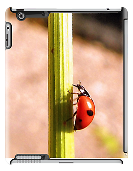 Get your ladybug iPhone, iPod, or iPad case today! Samsung Galaxy Cases coming soon.  http://www.redbubble.com/people/roxanna19/works/11879453-ladybug-by-carmencytha-2?p=ipad-case