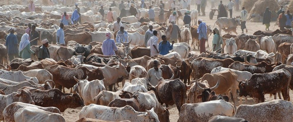 Severe drought triggers distress selling of cattle in Belagavi - http://dairynews.in/severe-drought-triggers-distress-selling-cattle-belagavi/? utm_source=Pinterest