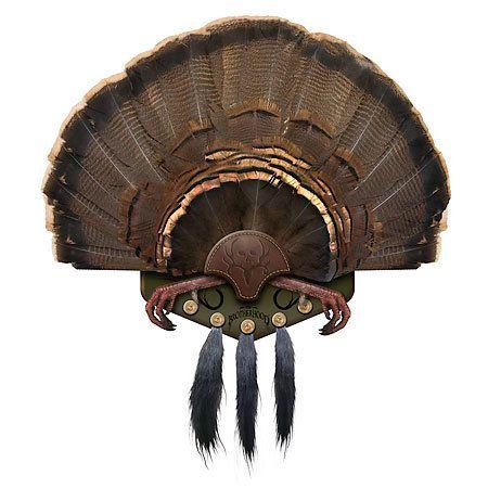 Very Nice Turkey Tail Mount Taxidermy Pinterest Nice