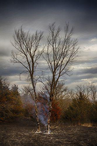 Burnt Trees | by Kansas Poetry (Patrick)