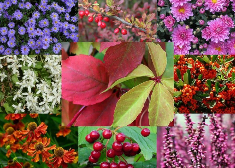 Top 10 Jesiennych Roslin Ktore Musisz Miec W Swoim Ogrodzie Zielony Ogrodek Plants Fruit Vegetables