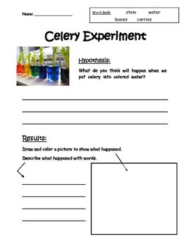 Celery Plant Experiment, Notes and Reflection Plant