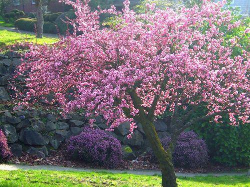 Spring Trees | spring tree