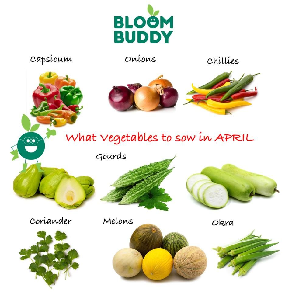 Bloom Buddy Provides The Best Organic Plant Growth Boosters In India We Offer All Purpose Fruit V Organic Fertilizer For Vegetables Organic Plants Vegetables