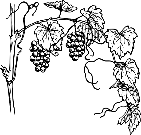 Black And White Vine Clip Art Grapevine Clip Art