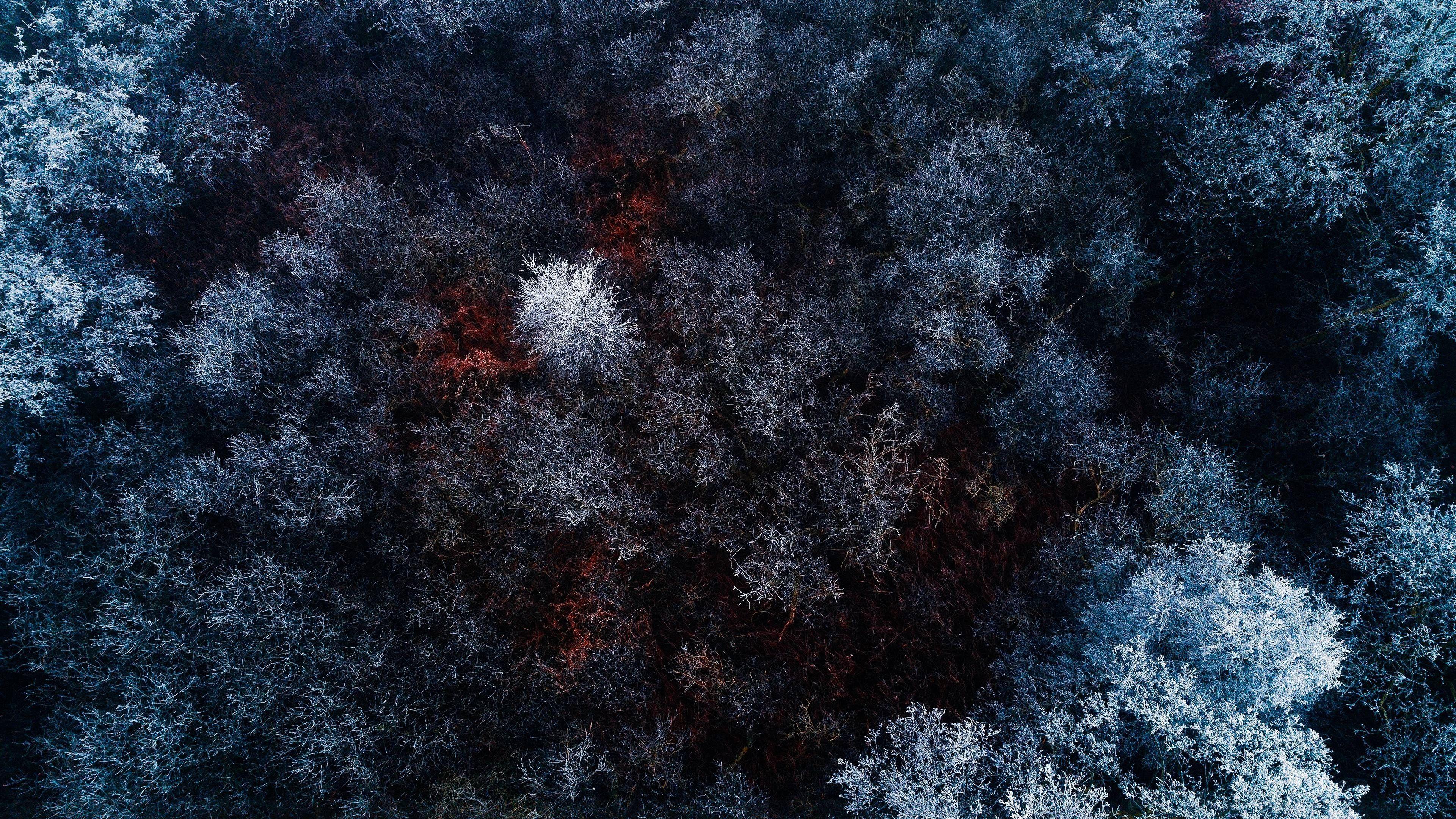 3840x2160 Forest 4k Best Widescreen Wallpapers Landscape Wallpaper Forest Wallpaper Hd Cool Wallpapers