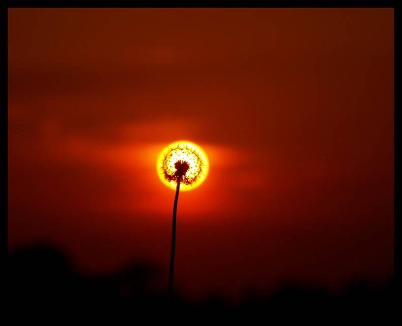 Flower sunset