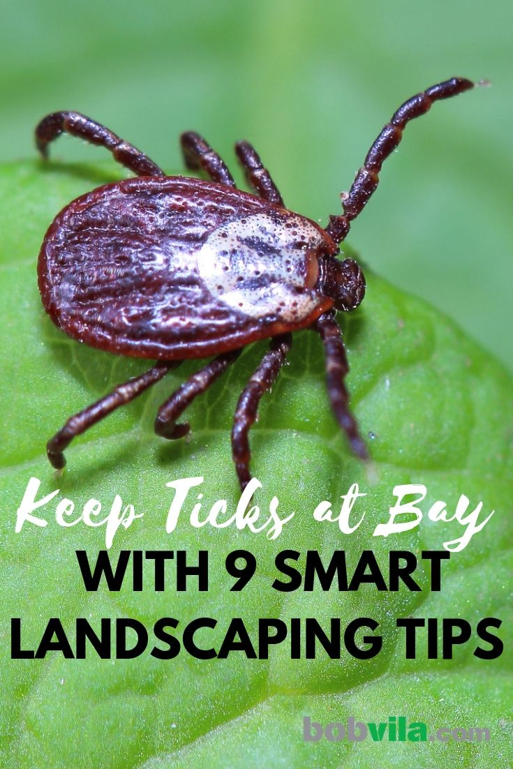 Keep Ticks at Bay with 9 Smart Landscaping Tips #landscapingtips