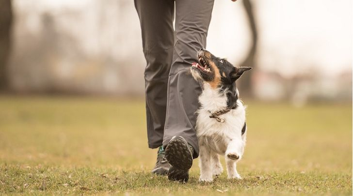 Dog Trainer Heel Training How To Become A Professional Dog