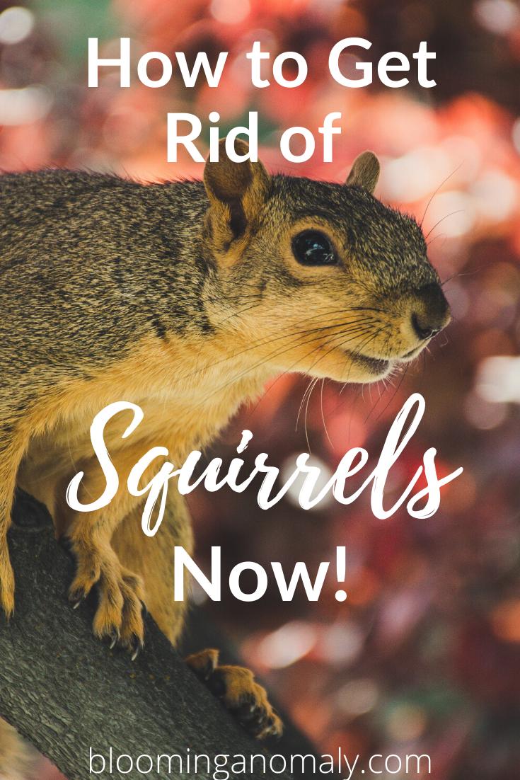 ea8f6e7762d82d9e7843c8be0d751115 - How To Get Rid Of Squirrels The Natural Way